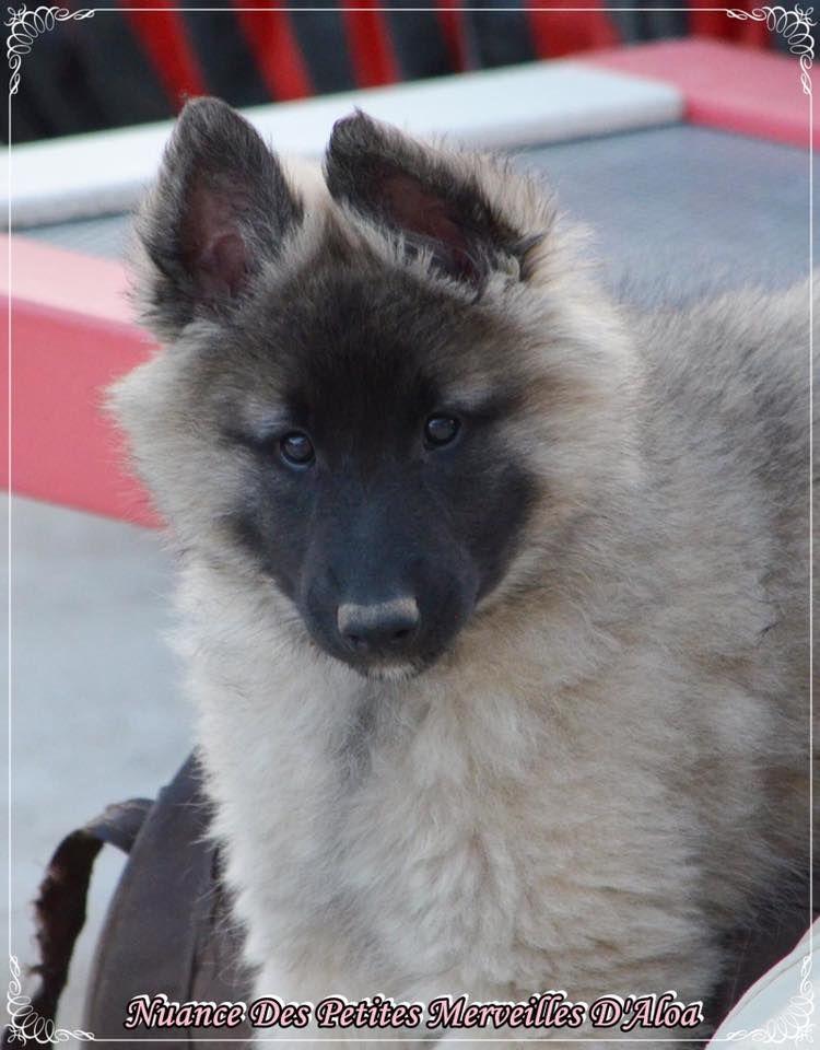 Publication : des Loups de la Tiarde  Auteur : Sandra