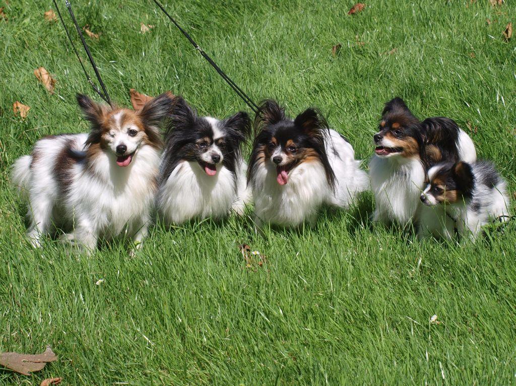 de la Roche des Oratrix - Une belle lignée de 5 générations