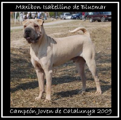 de Bluemar - JEUNE CHAMPION DE LA CATALOGNE 2009