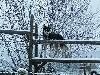 - Saillie du 10 février 2021 Ottawa et Onuuk des rêves de l'hiver blanc