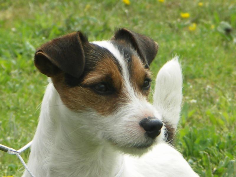 CH. Ad hoc Fancy free chien de race toutes races en tous
