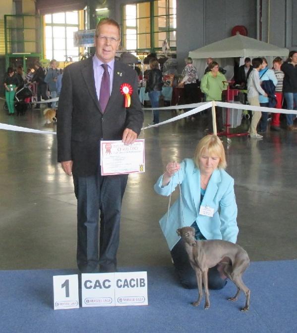 Couleurs d'Automne - Hatschipuh Glitzerflitzer CAC CACIB à Charleroi