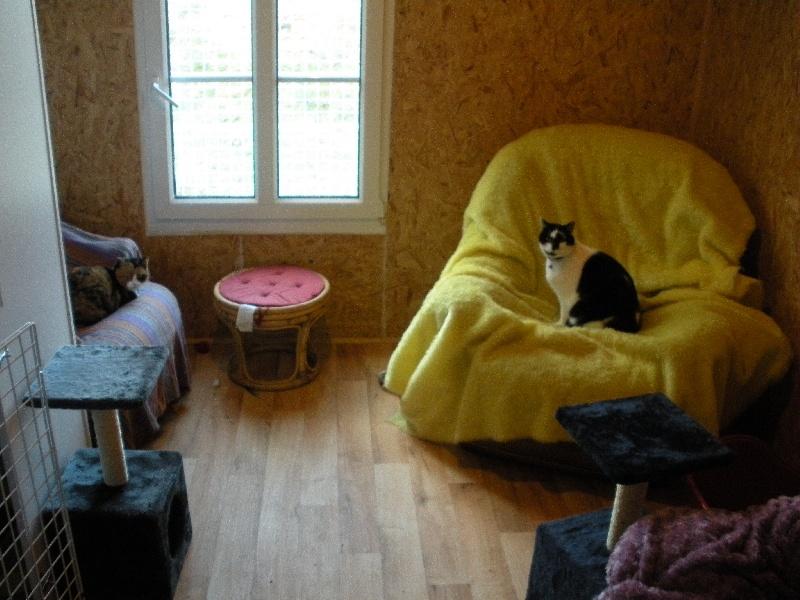 accueil elevage du bord de l 39 oust eleveur de chiens setter anglais. Black Bedroom Furniture Sets. Home Design Ideas