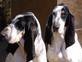 http://www.chiens-de-france.com/photo/eleveurs/68/13568/presentations/ee2321a0-a540-f164-557d-74b000d35037.jpg