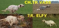 du mas des Vernets - Chiot disponible  - Setter anglais