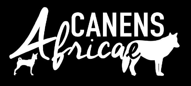 Canens Africae - Conditions requises pour acquérir un chiot SAARLOOS