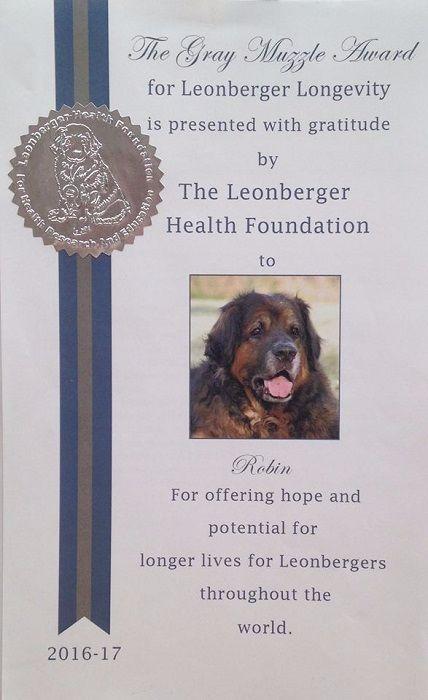 Des Neiges de Chantelouve - Grey Muzzle récompense 7 de nos chiens
