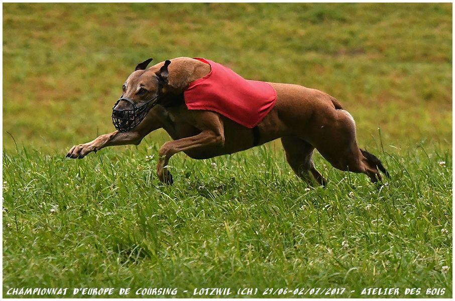 des sables d'élodie - Izïmaour Championne Internationale de Coursing