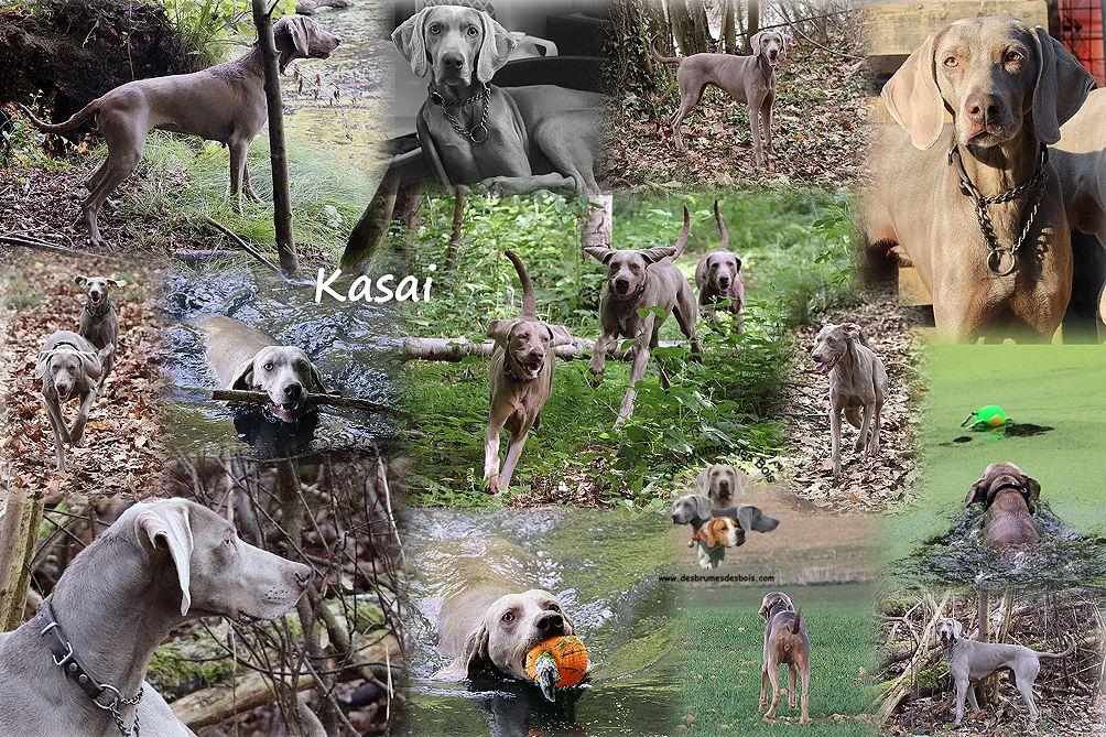 Kasaï Des brumes des bois