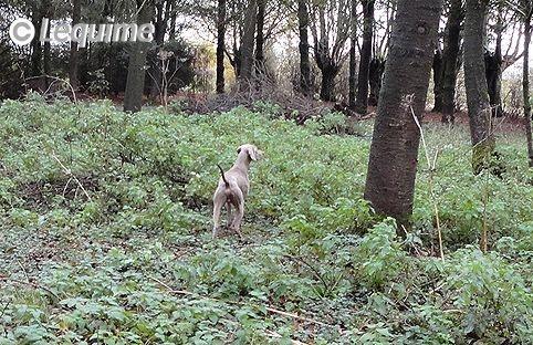Des brumes des bois - Lagos à la chasse