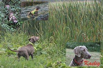 Des brumes des bois - présentation chiens