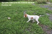 Quosmic Marco (ex cartouche) des Brumes des Bois