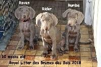 Royal Rider des Brumes des Bois