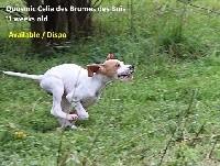 Quosmic Celia  des Brumes des Bois