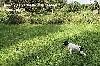 Quosmic Capri des Brumes des Bois