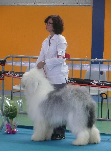 Gwendal mac moragh of barbary lane chien de race toutes - Mac dan perpignan ...