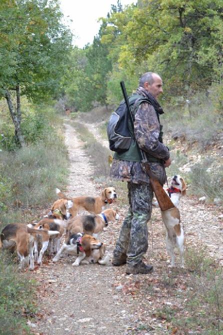 du Ron de L'Apio - Alain d'ORAISON dans le 04 avec sa meute de Beagles !