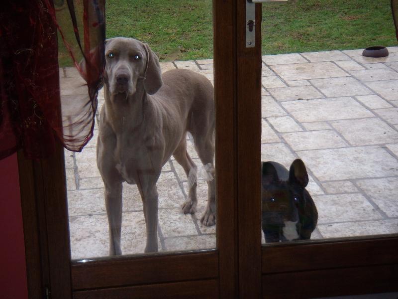 Denzel des portes des Weppes