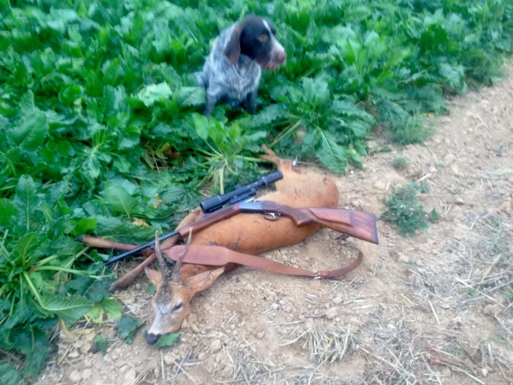 des Plaines du Cambresis - jason chasse aussi au pirsch comme lord