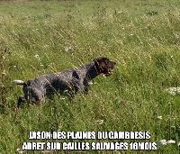 CH. Jason des Plaines du Cambresis