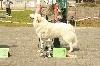 - Jaime de la Belletière, Meilleur du Race a la Nationale d'élevage Belg