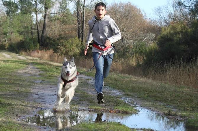 Accueil - Elevage d'Isarudy - eleveur de chiens Siberian Husky