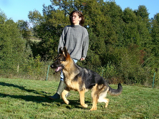 http://www.chiens-de-france.com/photo/eleveurs/78/15417/album/6ee0b05e-d705-c604-f164-61de2c5257f9.jpg