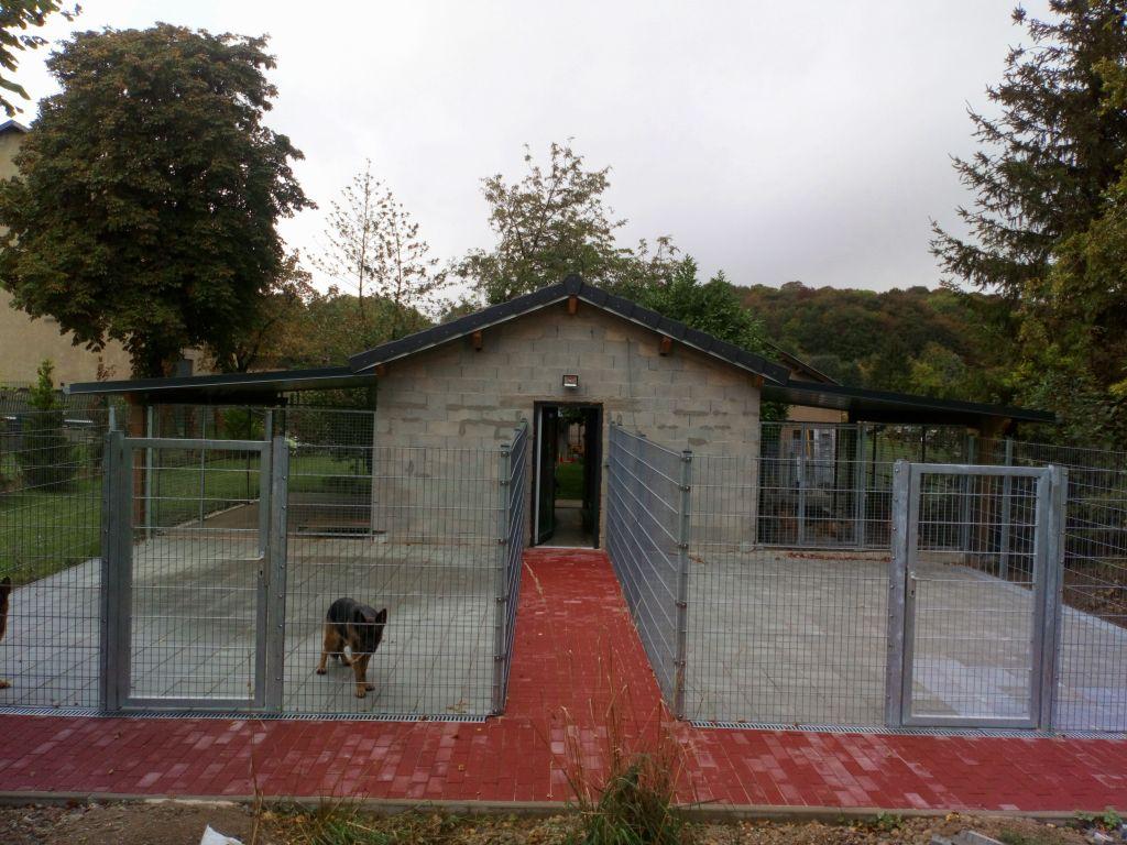Accueil - Elevage du Sol Invictus - eleveur de chiens Berger allemand
