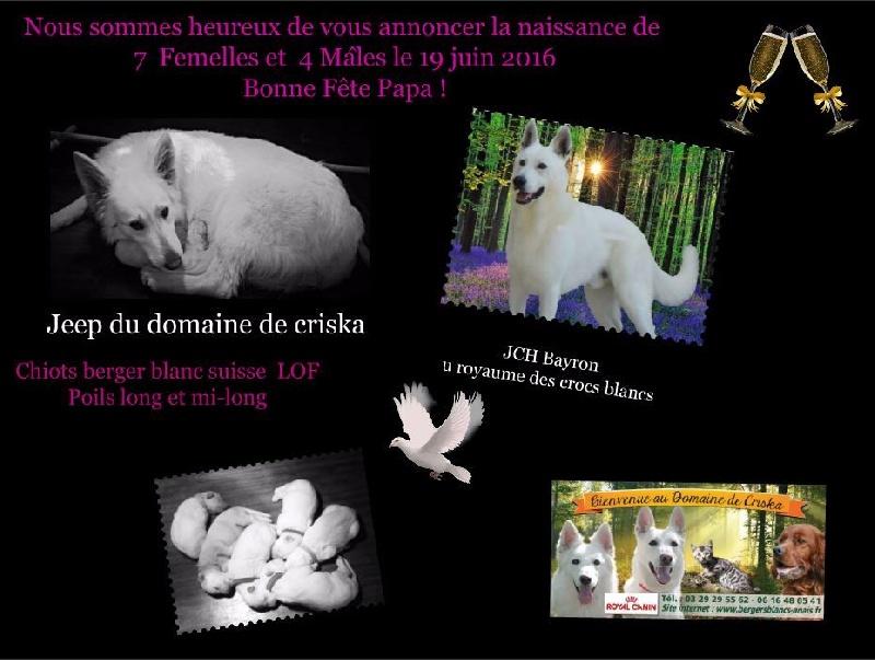 du Domaine de Criska - Chiot disponible  - Berger Blanc Suisse