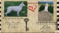 Berger Blanc Suisse - Chiots berger blanc suisse poils long et mi-long LOF - du Domaine de Criska