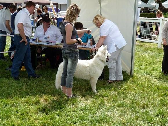 Accueil elevage du domaine de criska eleveur for Hotels qui acceptent les chiens