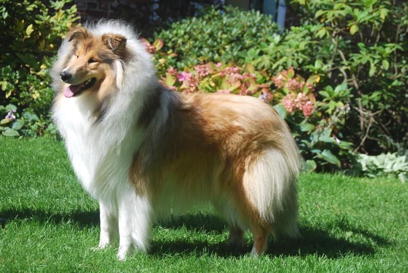 Easy lover du jardin des heliades chien de race toutes - A poil dans son jardin ...