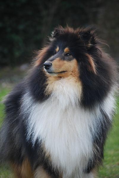 eternal sunshine of river tweed chien de race toutes races en tous departements france inscrit. Black Bedroom Furniture Sets. Home Design Ideas