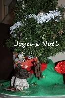 des Mannes Fleuries - Braque allemand à poil court - Portée née le 01/12/2018