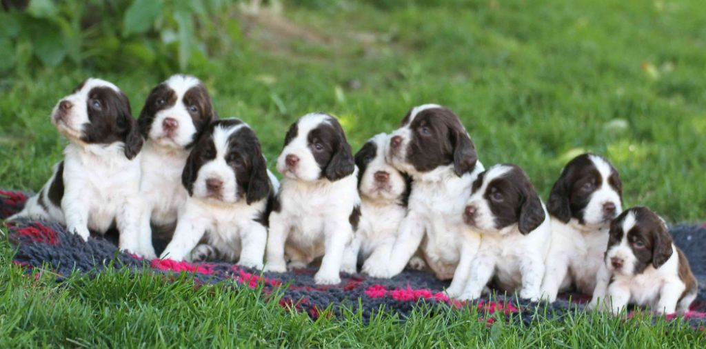 in Shade of Pure - CHIOTS