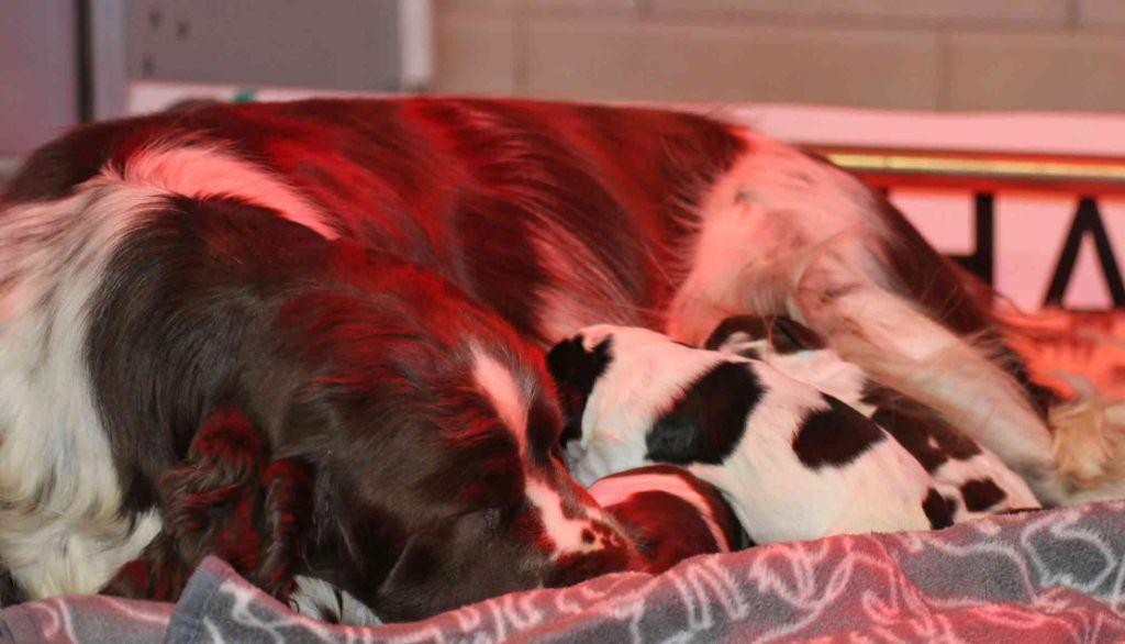 in Shade of Pure - Les bébés d'Olivia et Pomito sont nés