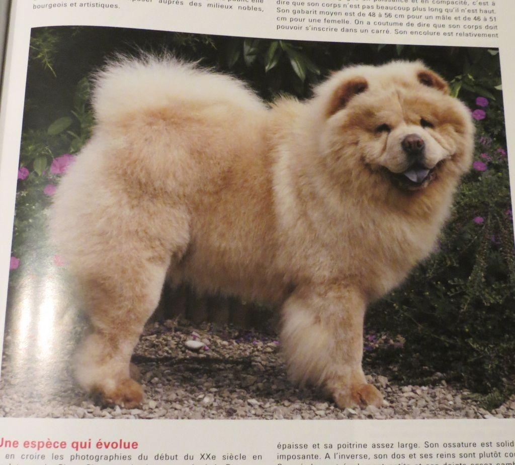 de Sin-Hiang - Vos Chiens Magazine