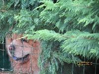 Humprey des Oursons de petit-palais