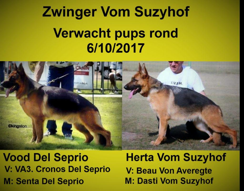 Vom Suzyhof - pups verwacht begin oktober!
