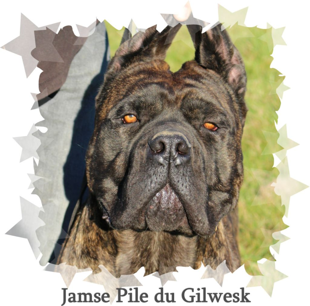 Publication : du Gilwesk
