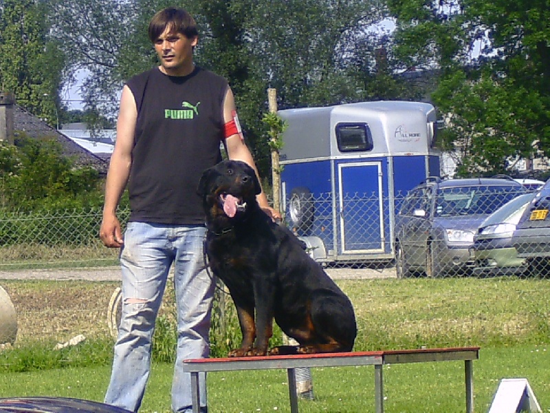Accueil - Elevage du Gilwesk - eleveur de chiens Rottweiler
