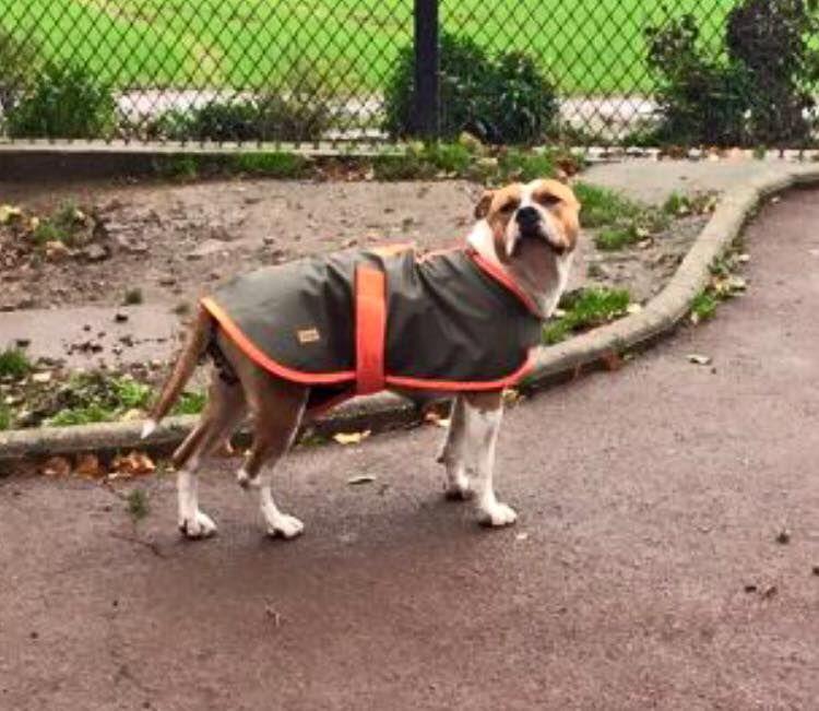 Photo Pension Canine toutes races