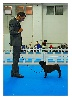 - De Retour du Double Dog Show de San Marin....
