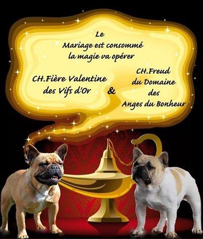 du Chevalier Gascon - Bouledogue français - Portée née le 10/02/2014
