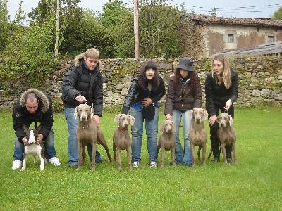 el Bosque de Lugh - Family weim & Friends in Oviedo