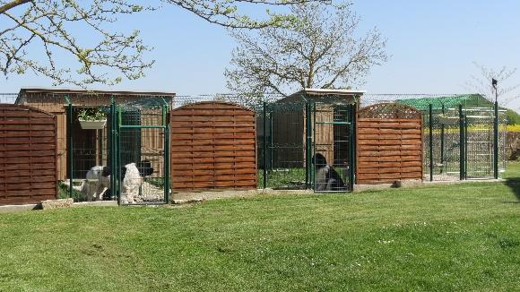 Accueil - eleveur de chiens Terre-neuve en Charente Maritime
