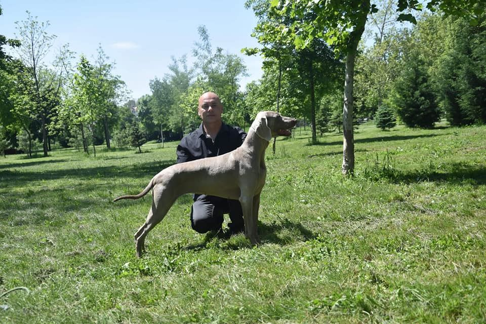 du domaine des Tommyknockers -  notre élevage compte un nouveau titre de championne de Serbie