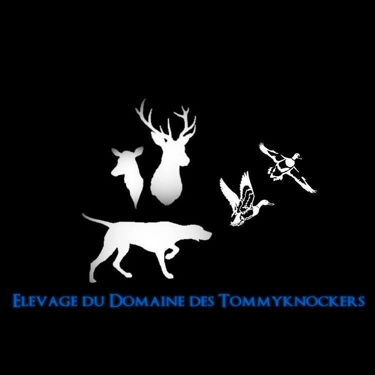 du domaine des Tommyknockers