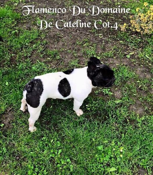 Publication : du domaine de Cateline  Auteur : DOMAINE DE CATELINE