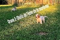 OBELIX DE L'ÉCHO DE LA MORDORÉE